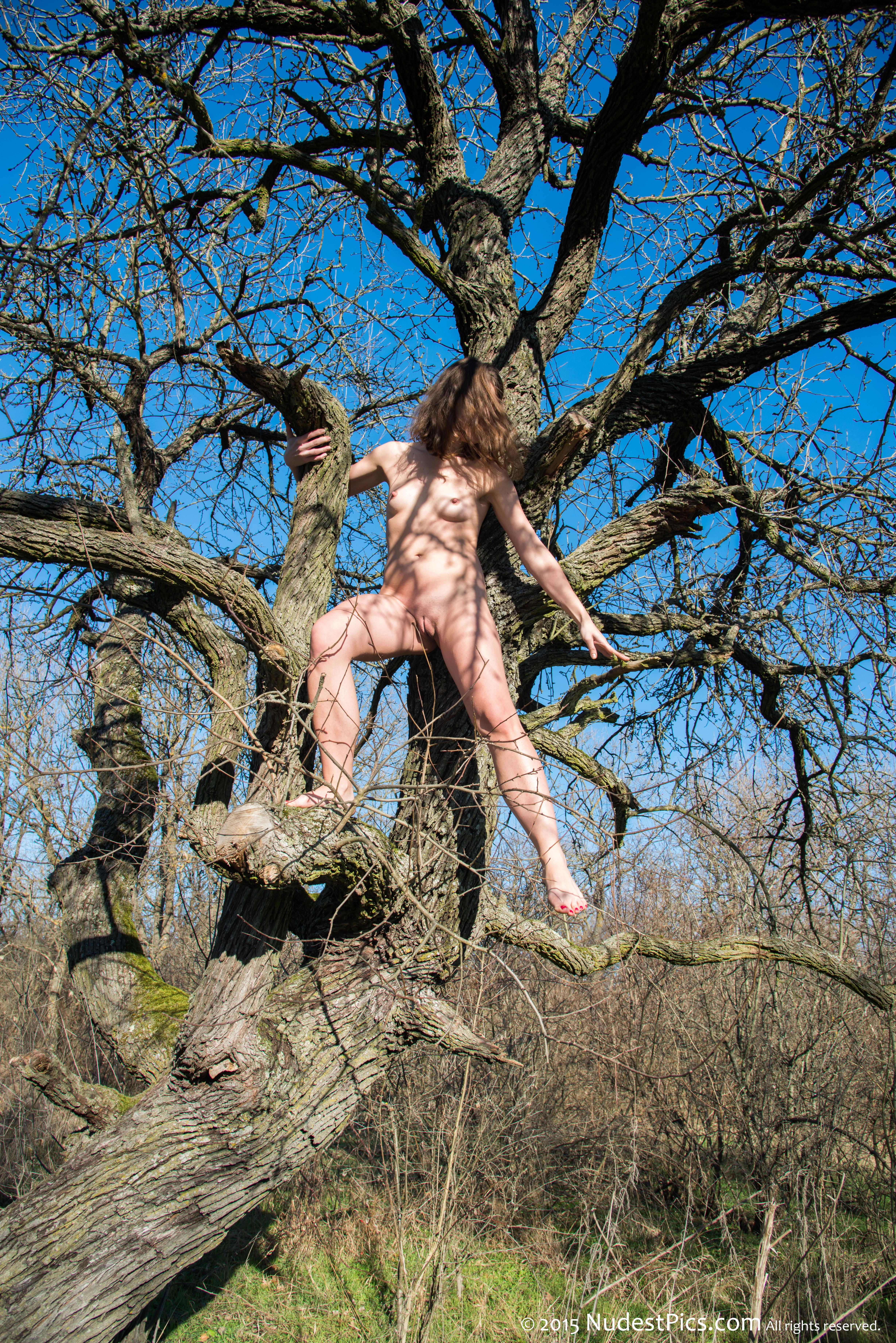 Nude Savage Girl in a Tree full HD