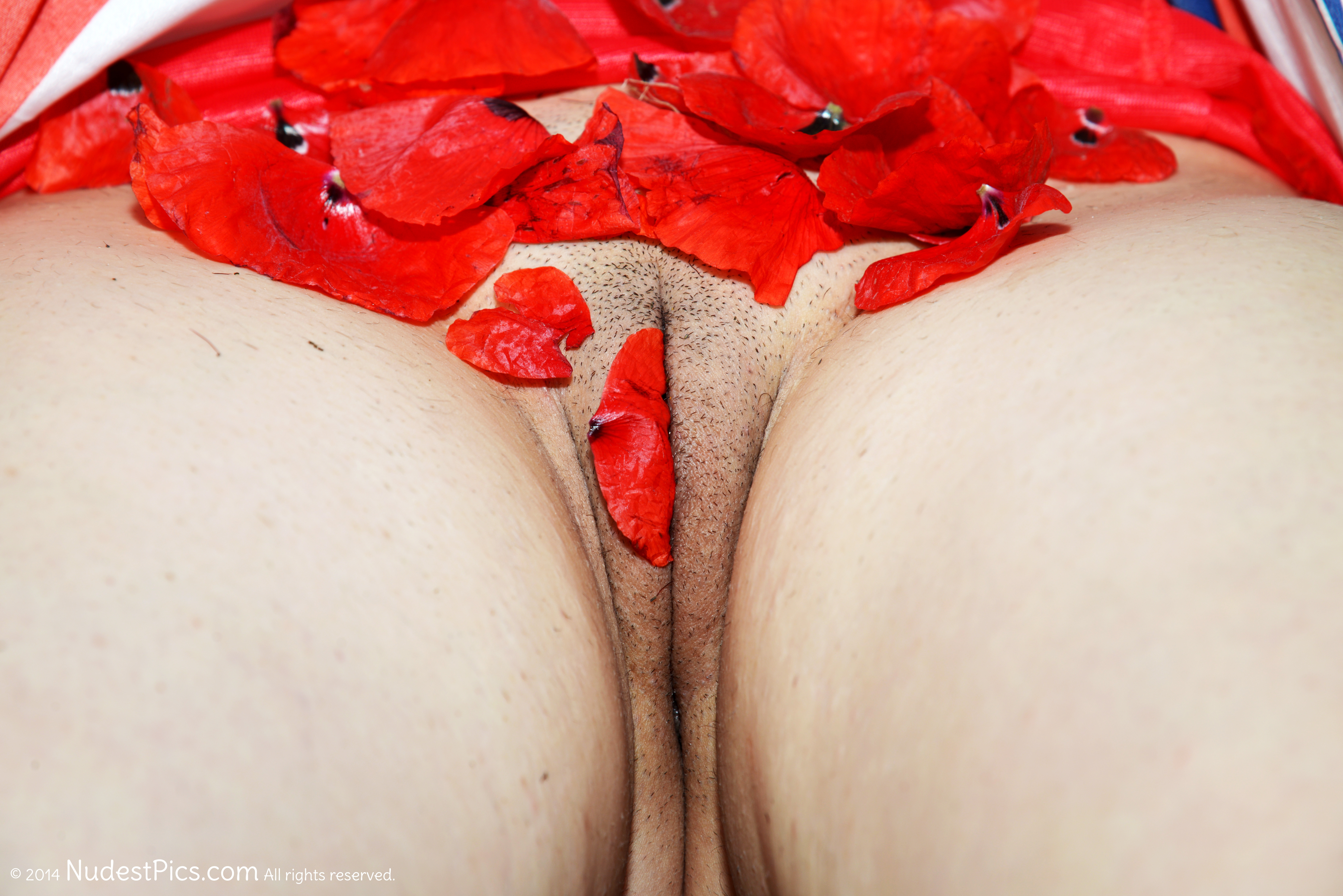 Pussy with Red Poppies Petals HD