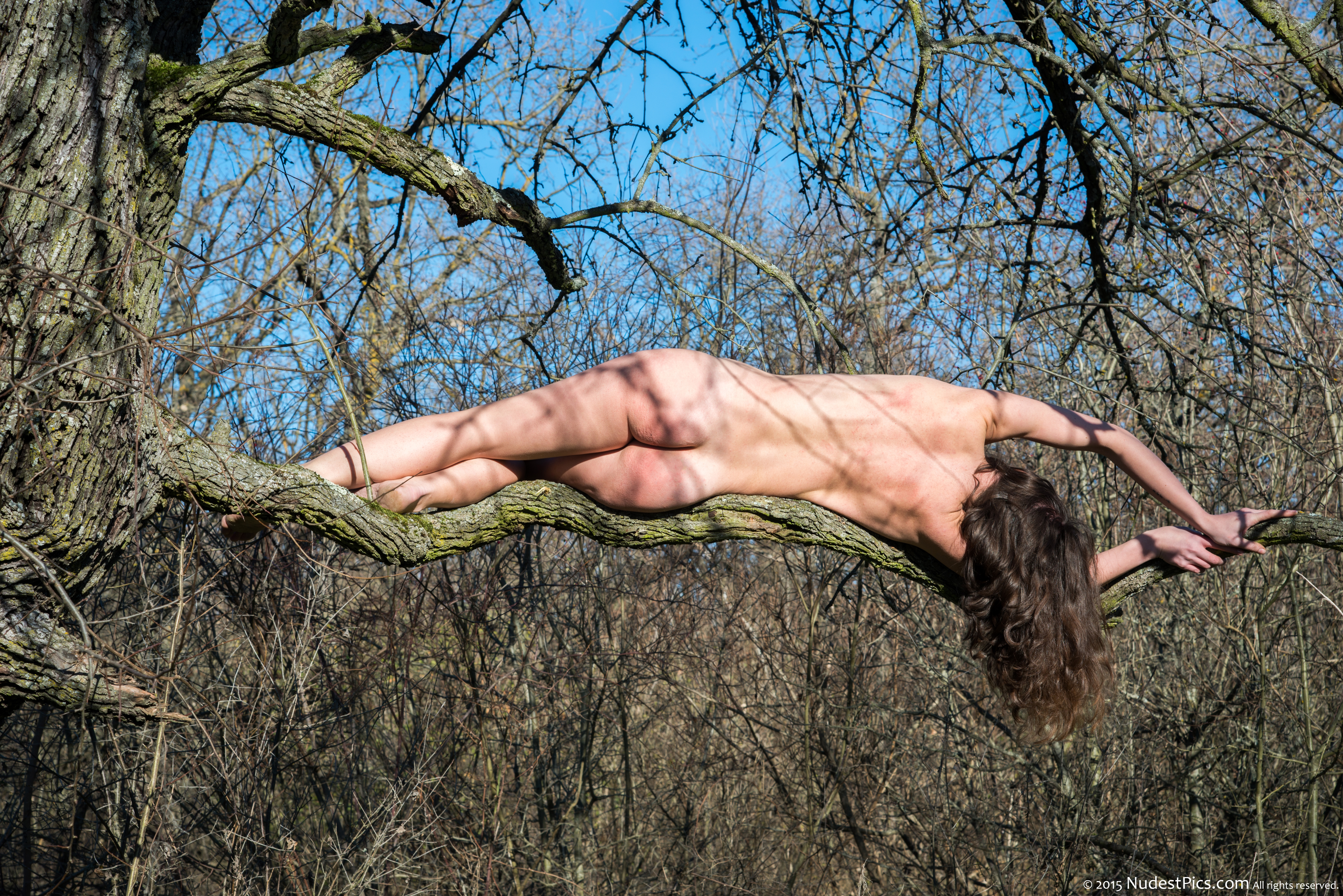 Nudist Girl Sunbathing on a Branch from Behind